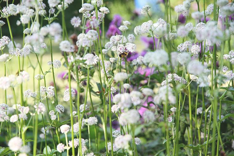 hunajaista kesamokki lifestyle valkoiset kukat