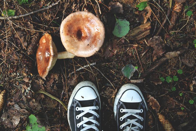 fromwhereistand hunajaista metsassa