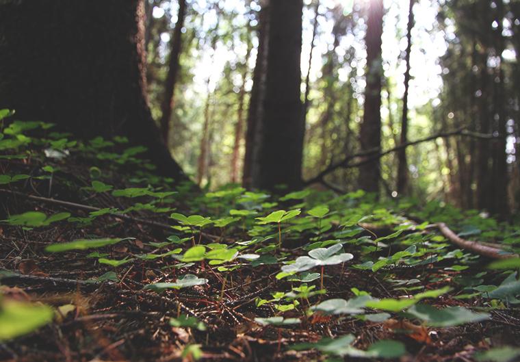ketunleipa hunajaista metsassa