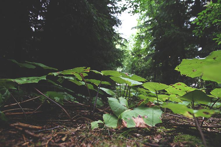 metsassa hunajaista blogi luonto