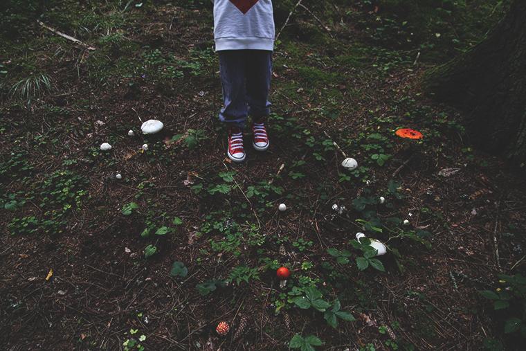 karpassienet metsassa hunajaista mini rodini