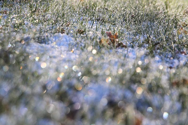 huurre nurmikko hunajaista blogi photography