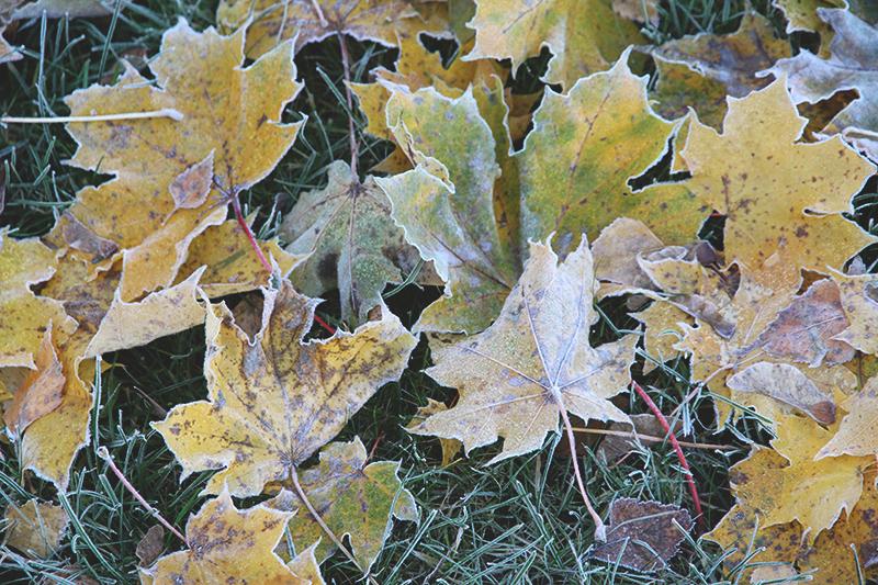 huurre syksy fall autumn hunajaista blogi