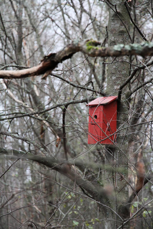 punainen linnunpontto hunajaista