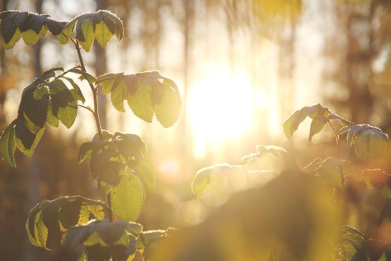 sunrise auringonnousu hunajaista blogi valokuvaus