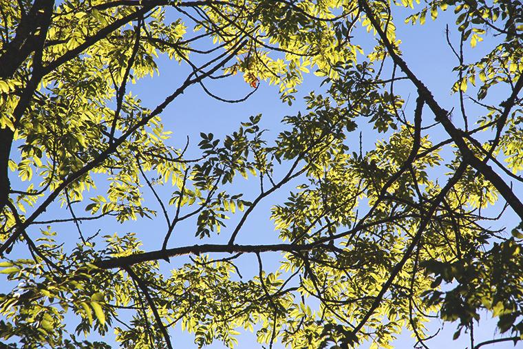 toissa hunajaista puiden alla