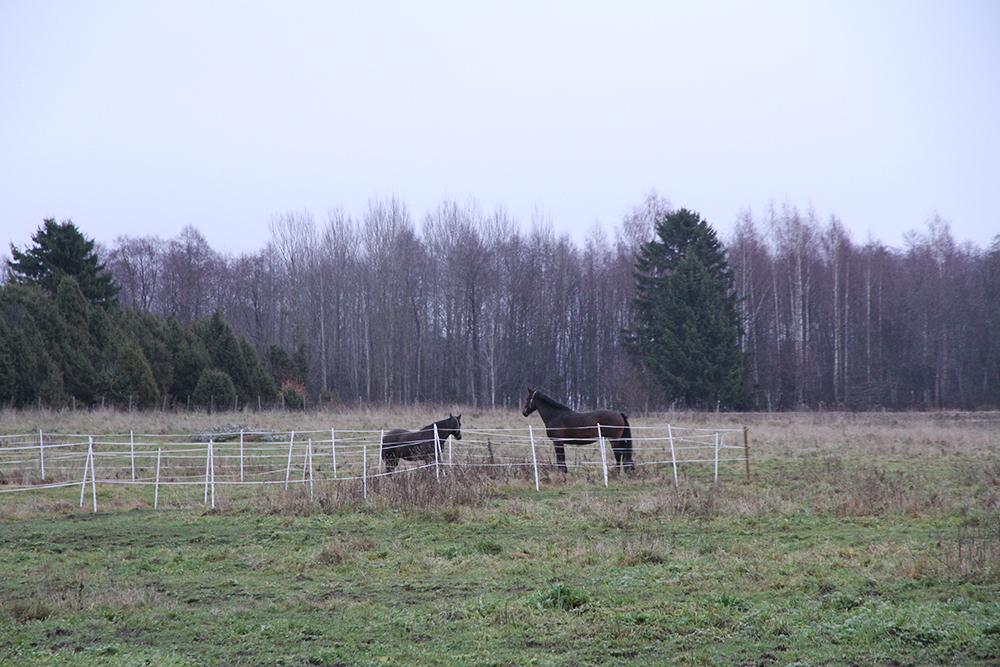 retulan saari hevoset