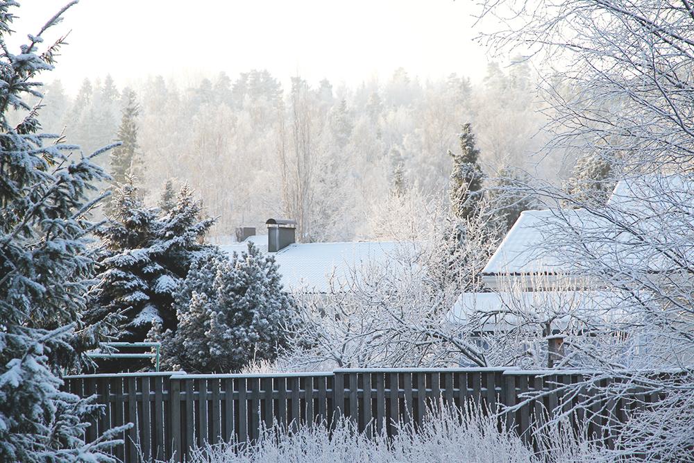 takapihalta hunajaista talvi