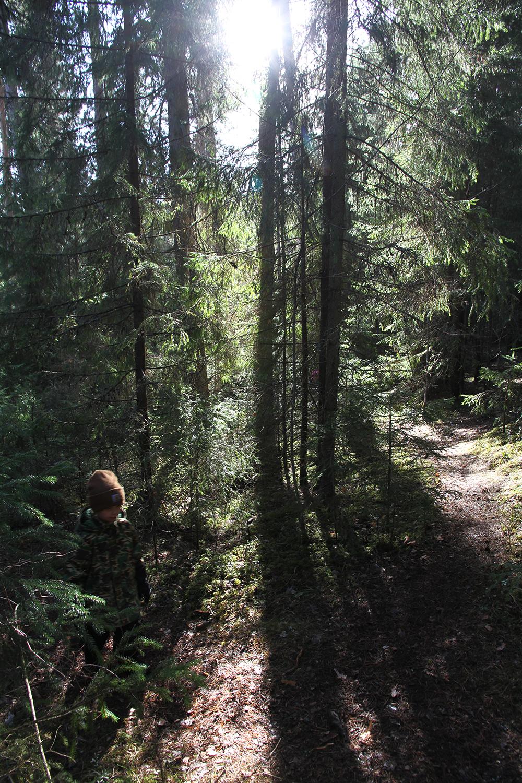 hunajaista metsassa siiri vaeltaa