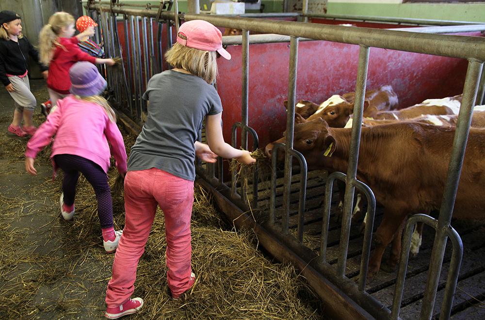 hunajaista arla maitotilavierailu