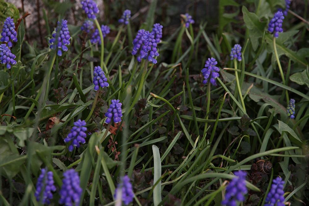 hunajaista kevat takapihalla puutarha