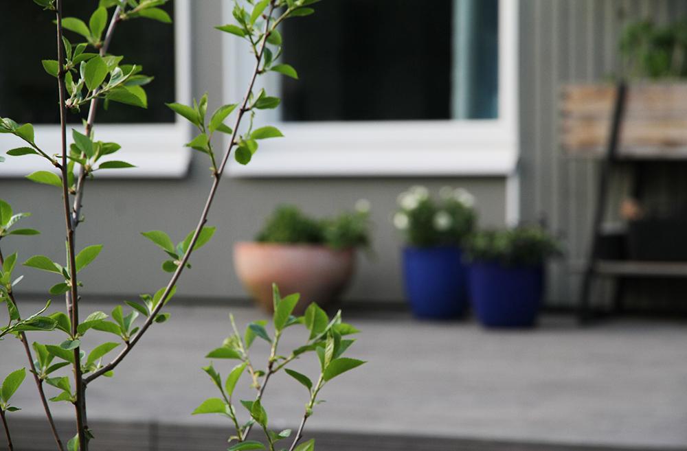 hunajaista takapiha terassi puutarha kirsikkapuu kekkila