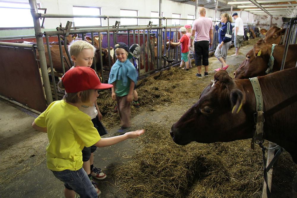 lapset lehma tilavierailu arla maitoa suomesta