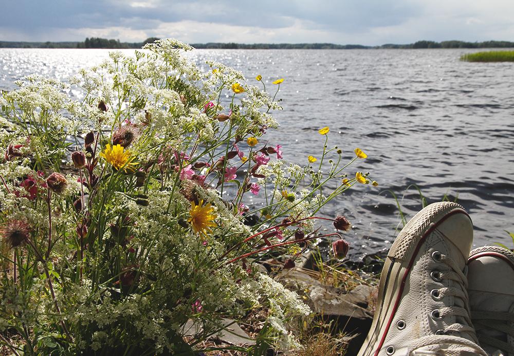 juhannus hunajaista 2014 niittykukat orivesi