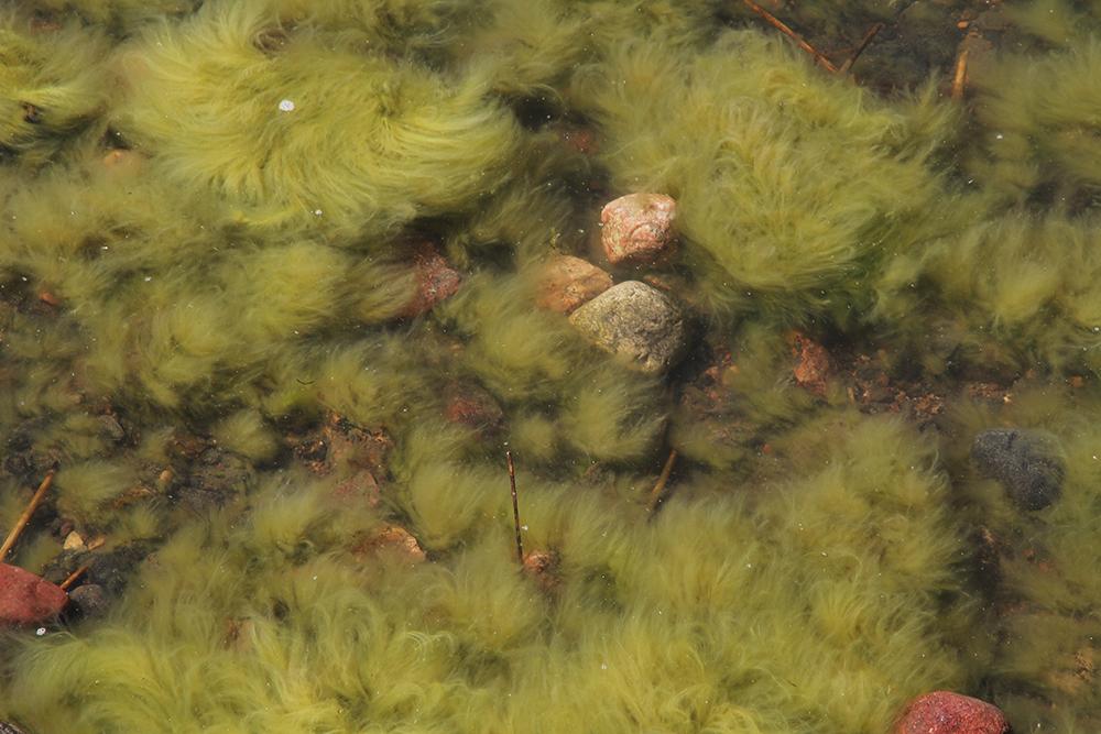 merikarvaa hunajaista