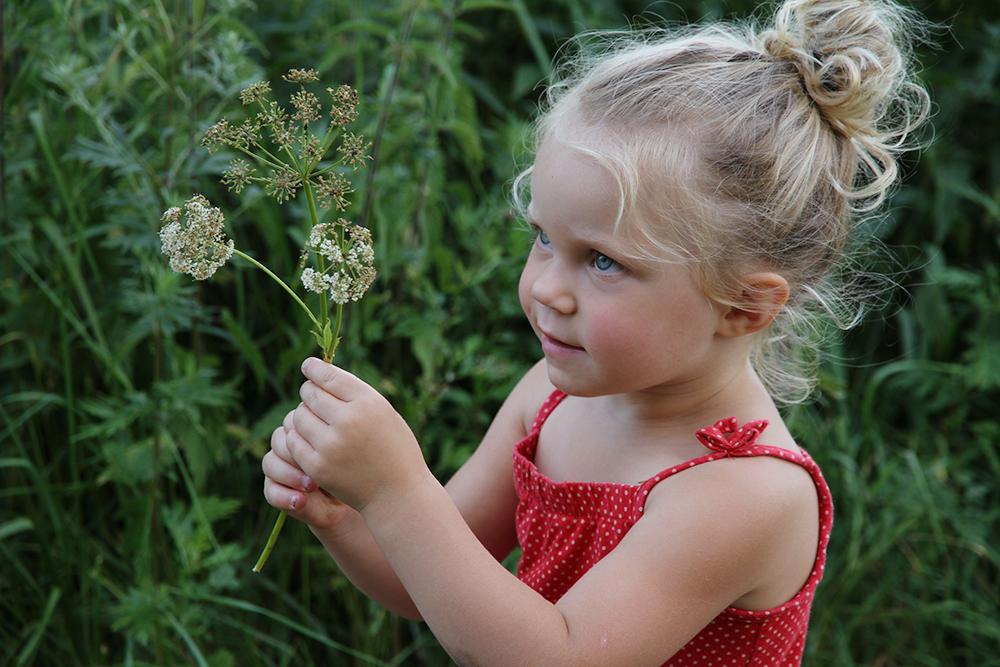 hunajaista aino antaa kukan mirkkumuori