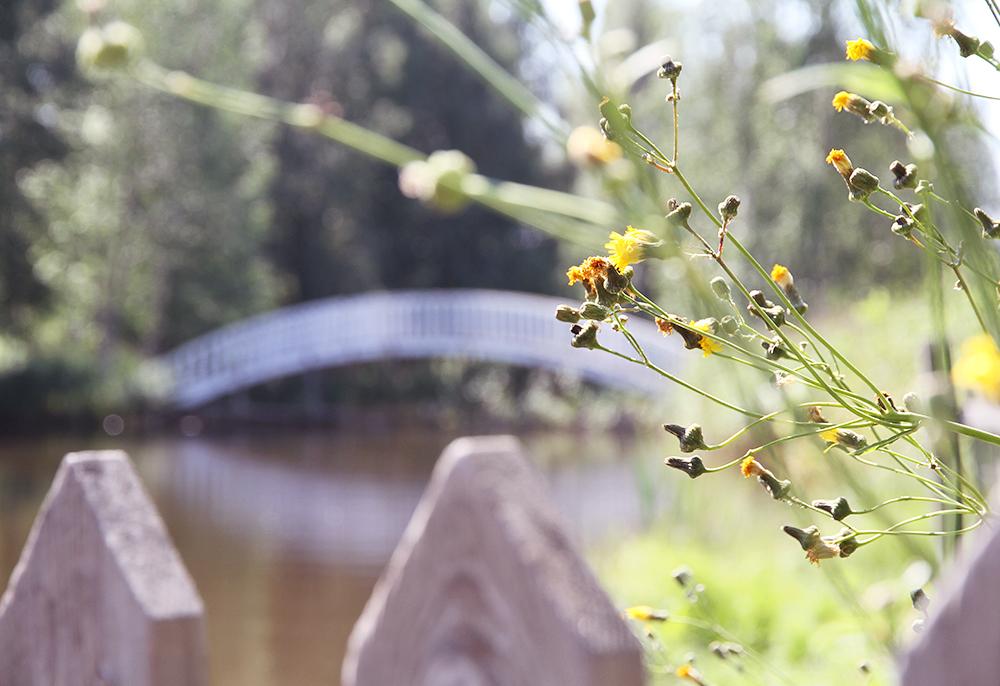 hunajaista puuhamaa valkoinen silta