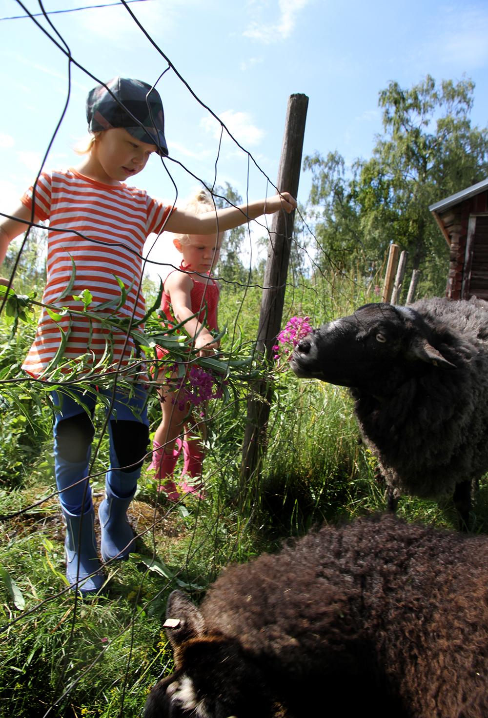 hunajaista valokuvaus lapset ja lampaat kesamokki lifestyleblogi