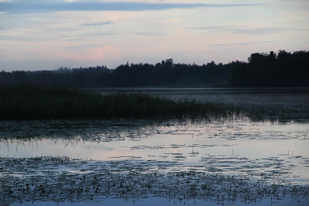 ilta hunajaista nature luontokuvaus blogi