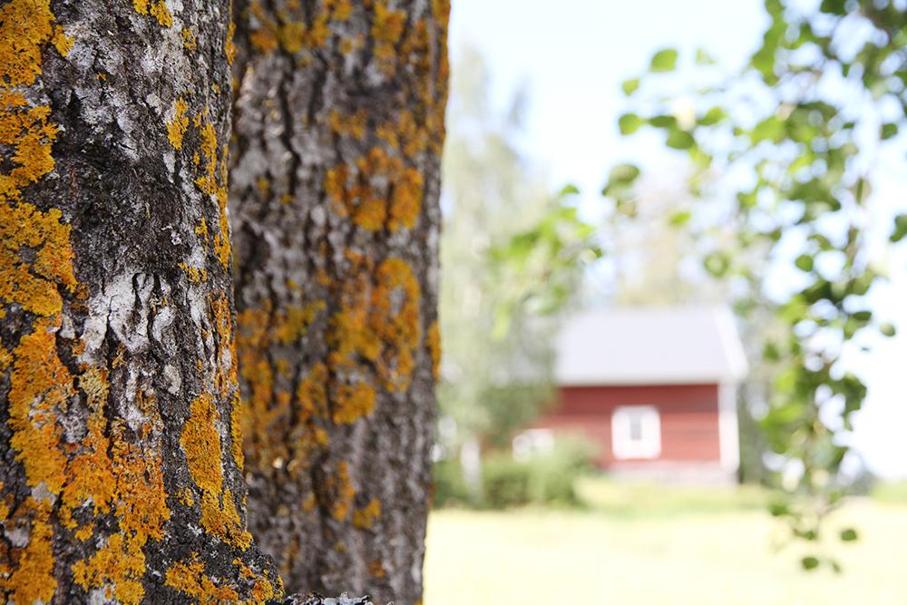 pellon laidalla hunajaista