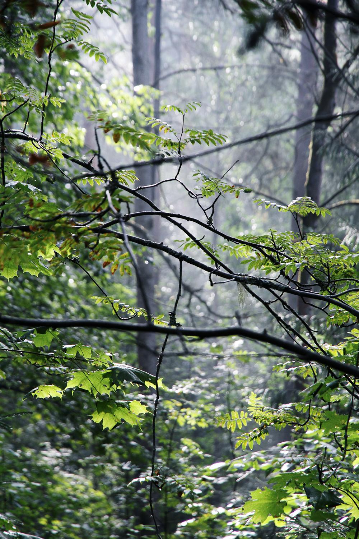 hunajaista metsaeskarissa toissa at work metsa luonto ahvenisto