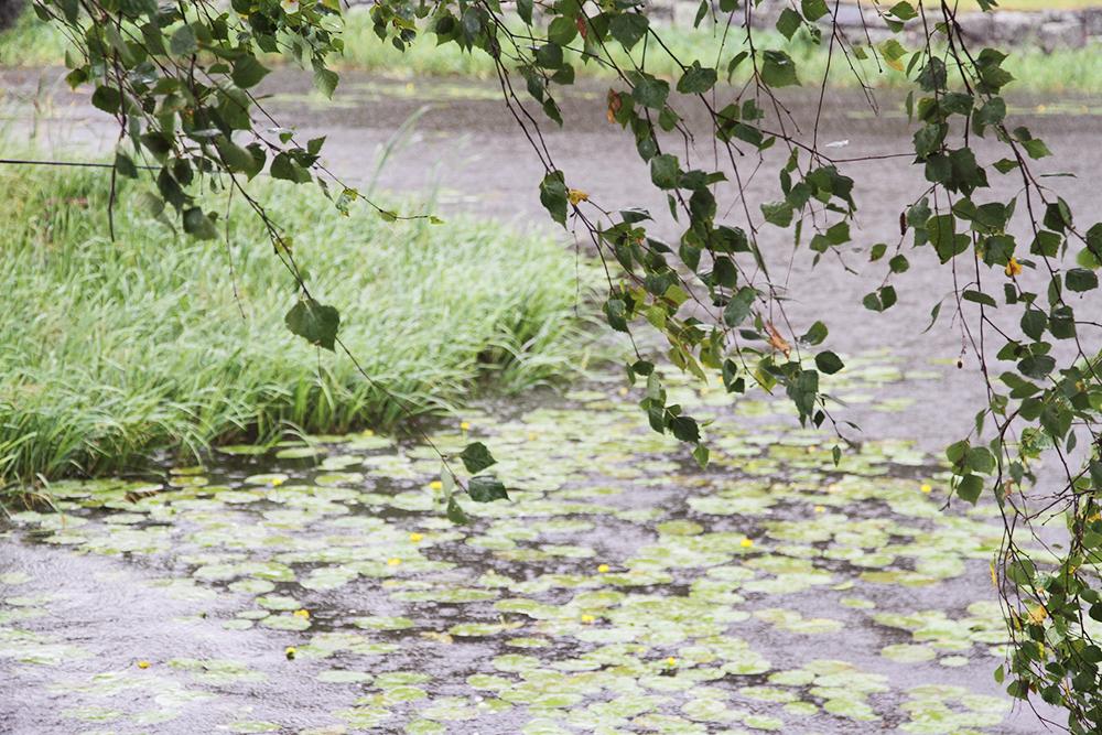 hunajaista sade elokuu 2014