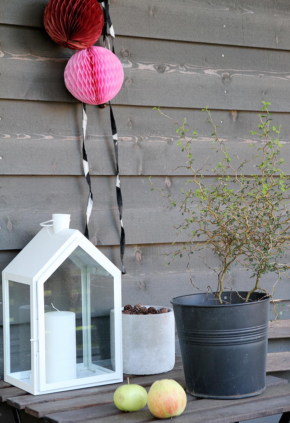 hunajaista kummituspuu terassi home koti sisustus
