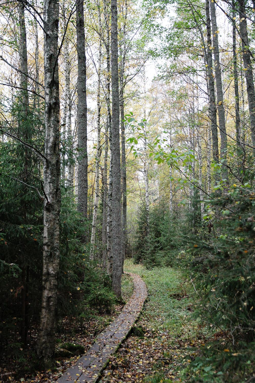 hunajaista metsa vaeltaminen vanajanniemi