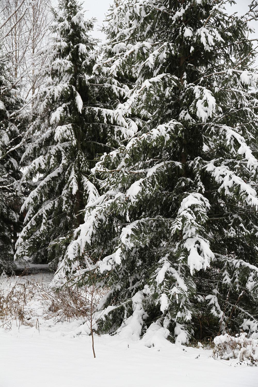 hunajaista takapihalla lumi