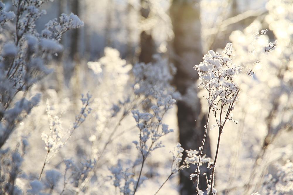 hunajaista huurre talvi metsa valokuvaus phography nature