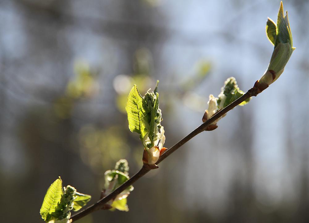 hunajaista kevat luontokuvaus blogi