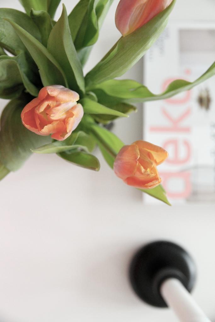 hunajaista tulppaanit deko sisustusblogi nappula iittala