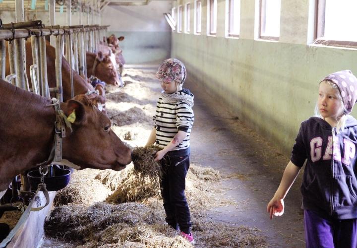 hunajaista arla maitotila lapset
