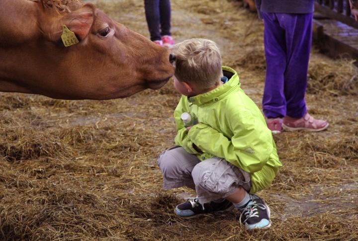 hunajaista arla maitotila