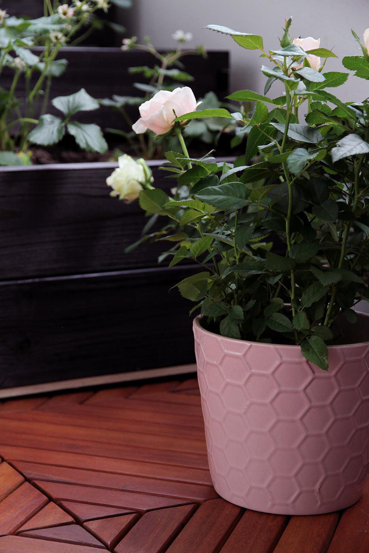hunajaista kekkila ruusut anno