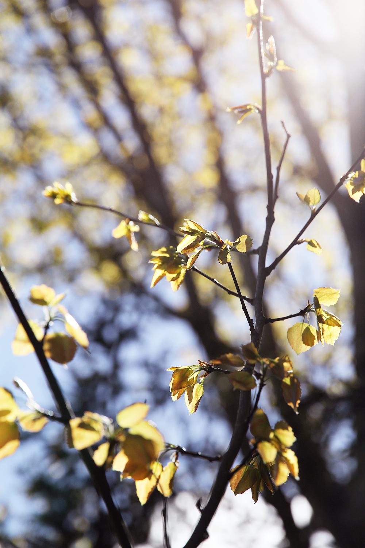 hunajaista kevat