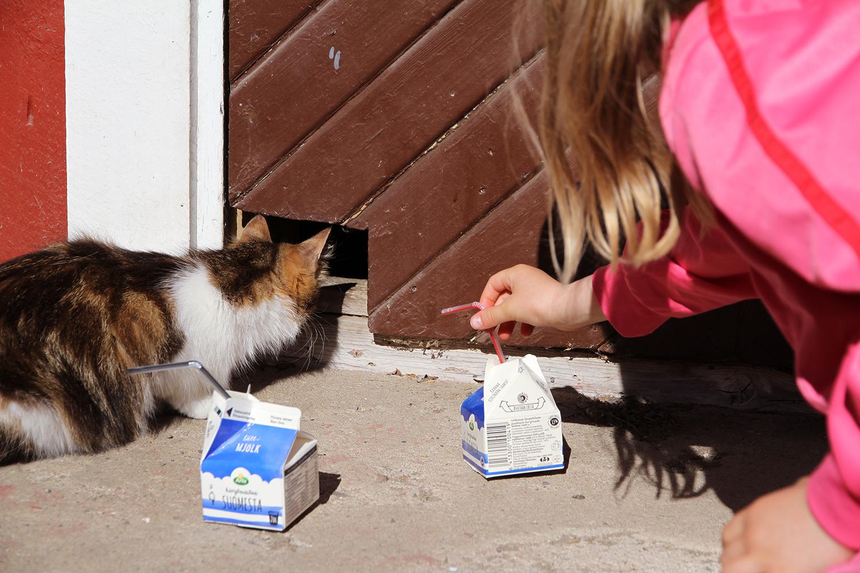 hunajaista kissalle maitoa lapset arla