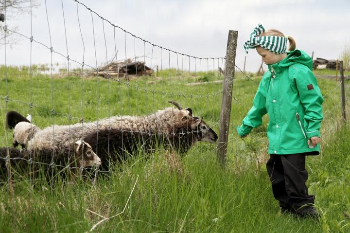 hunajaista lammaskuiskaaja siiri reima