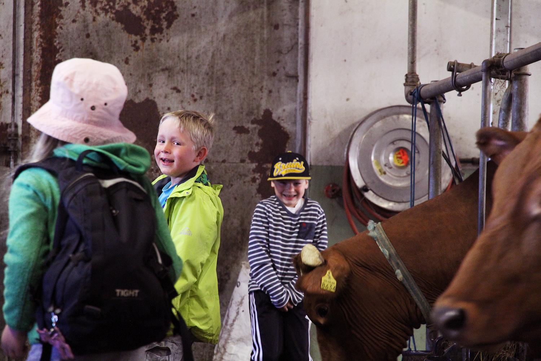 hunajaista lapset lehmat