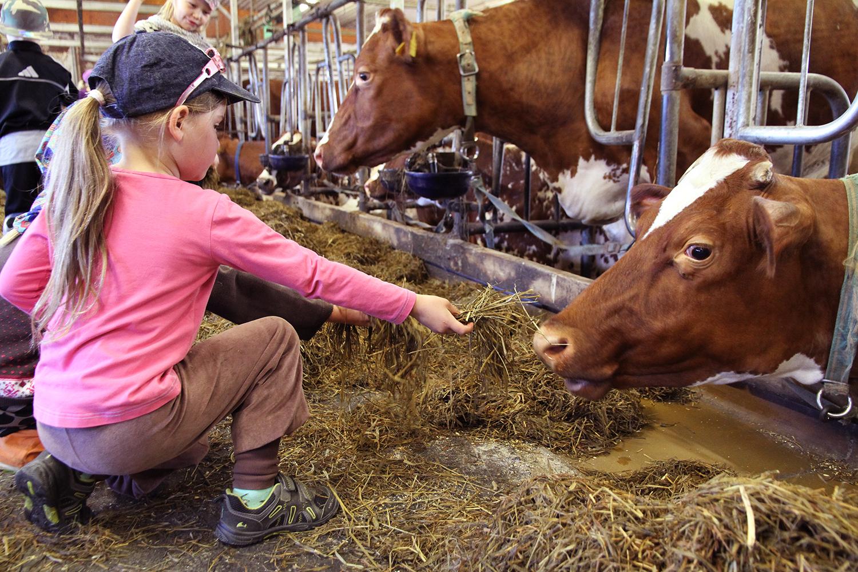 hunajaista lapset maitotilalla arla