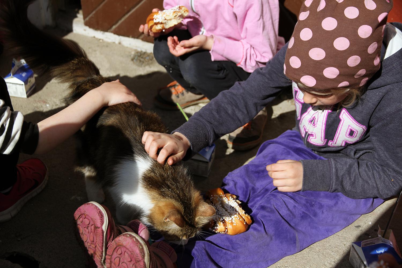 hunajaista maitotilalla kissa ja lapset