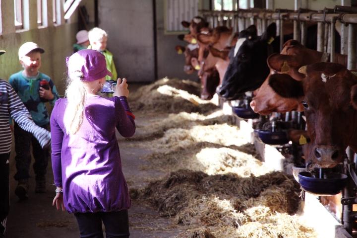 hunajaista maitotilalla turunen hameenlinna